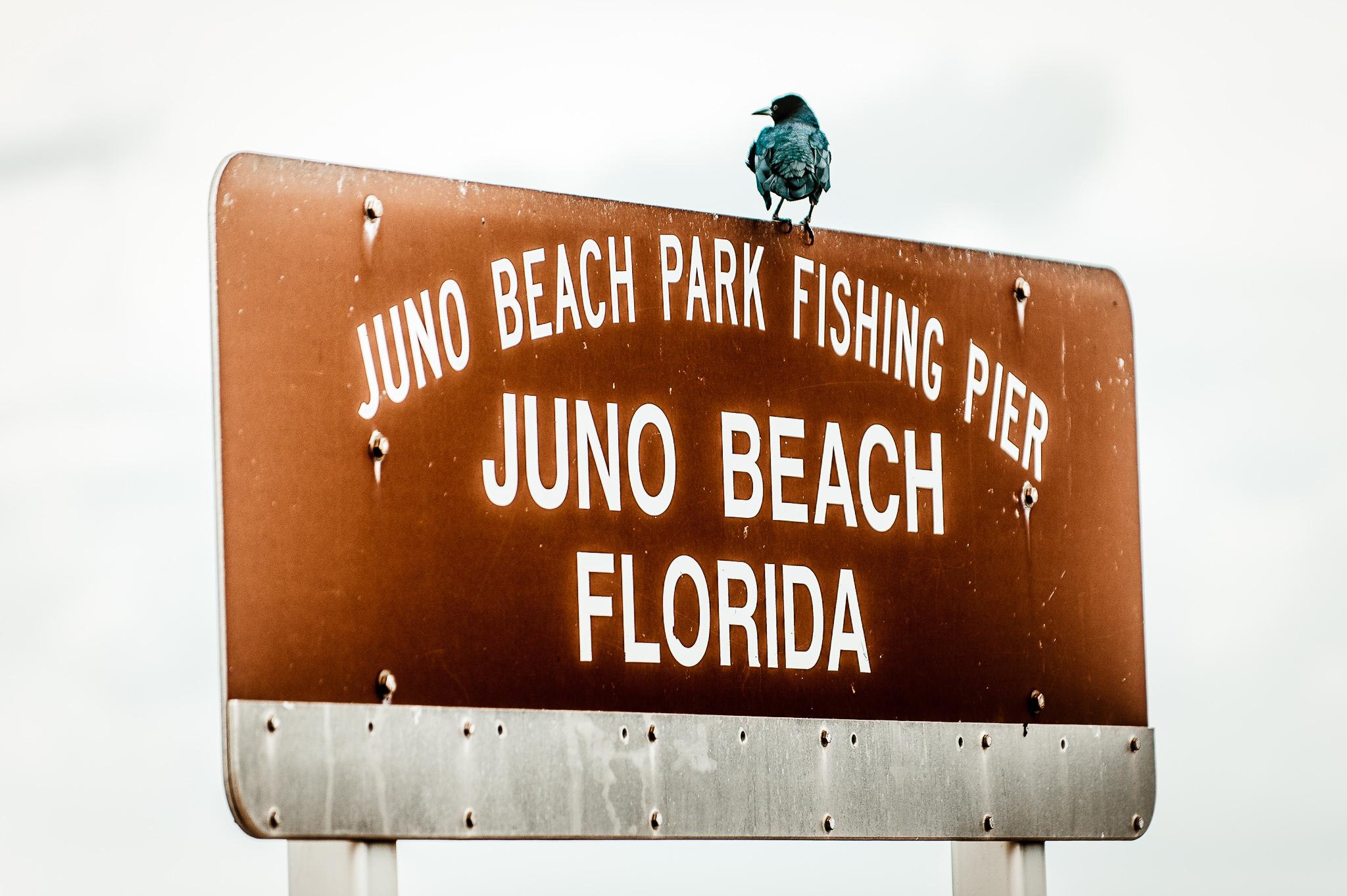 Villas Of Juno Beach Florida