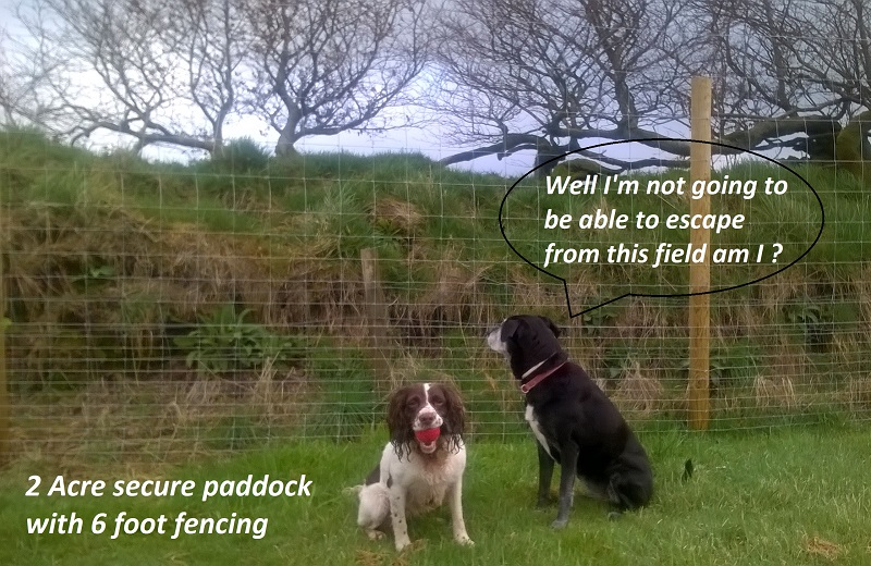secure dog field