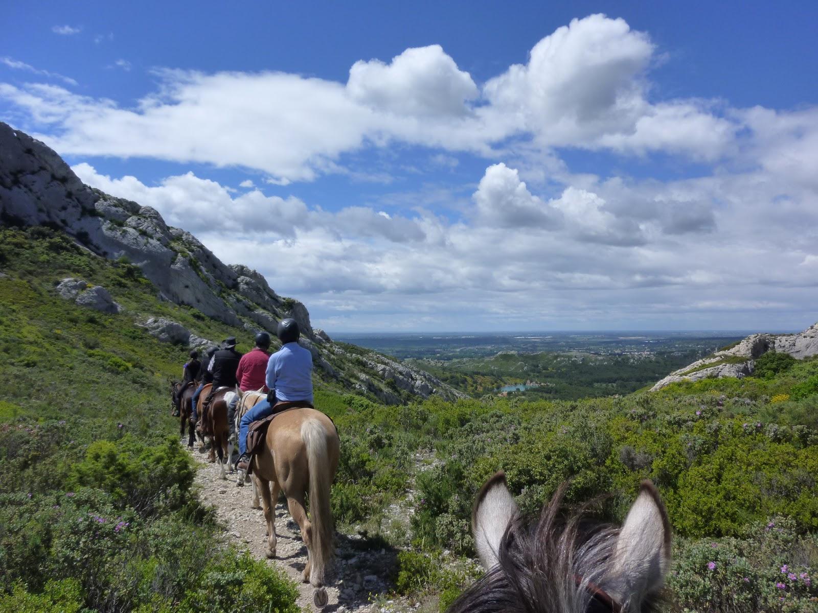 HORSE ALPILLES