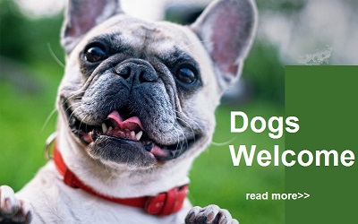 dogs very welcome in North Devon