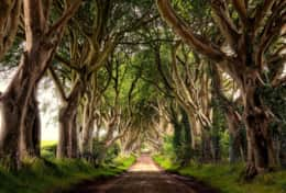 The Dark Hedges - site seeing near Limepark cottages on the North coast of Ireland