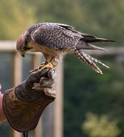Batsford Falconry Centre