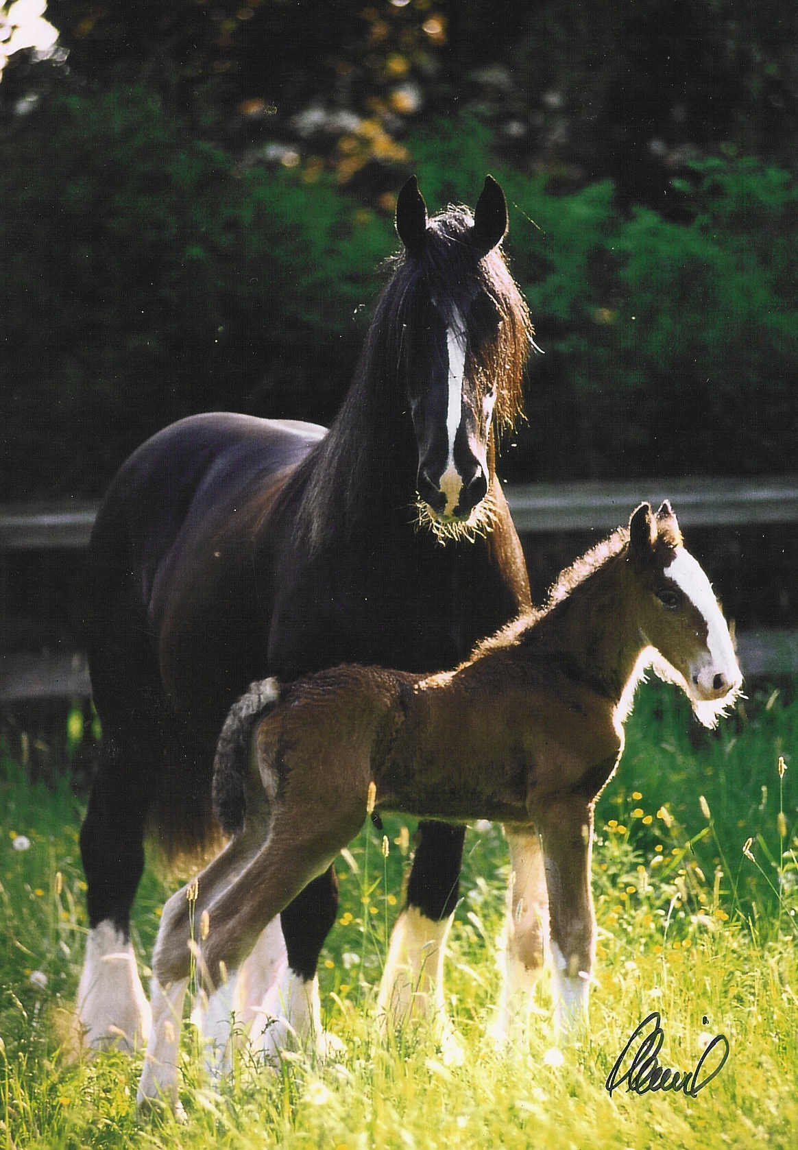 Princess and Sandor (foal) at Far Forest Germany
