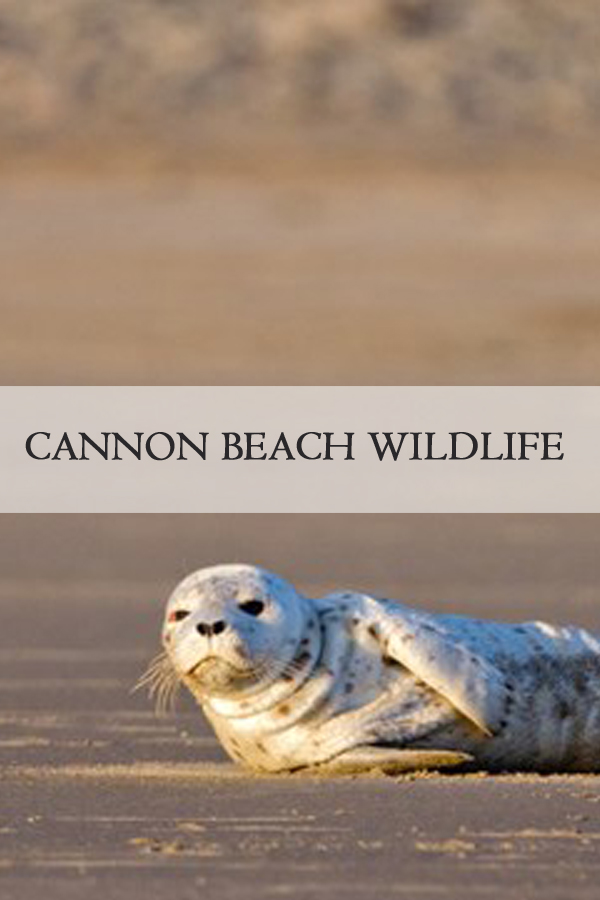 Wildlife: Cannon Beach