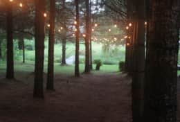 The forest decorated with Edison lights (available to rent)