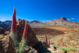 The Teide National Park. Here you can admire landscapes that seem to belong to another planet. You w
