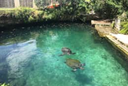 Turtle Grotto - Photo credit to Catherine B.